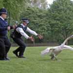 Yes, I know, it's a wild swan chase, right?